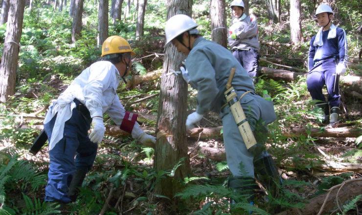 企業の森づくりサポート事業